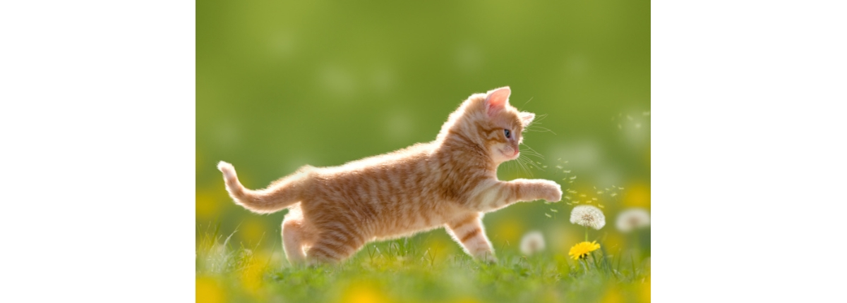 parassita di cacca di gatto